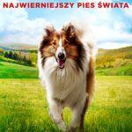 Lassie wroc oficjalny plakat 711x1024